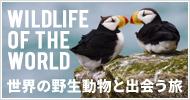ワイルドライフツアー Wildlife of the world 世界の野生動物と出会う旅