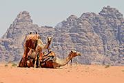 王の道が貫く砂漠の国 ヨルダン