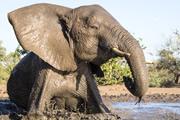 マシャトゥ動物保護区とグレーター・クルーガー
