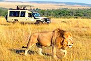 キリマンジャロ展望ロッジに泊まる ケニア・タンザニアサファリ