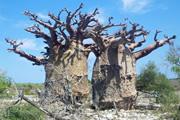 ベレンティ保護区も訪れる マダガスカル大周遊