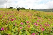 花のカース高原フラワーウォッチング