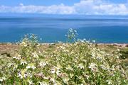 花のキルギス天山自然紀行
