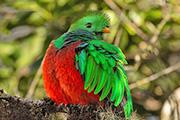 コルコバード国立公園も訪れる コスタリカ自然観察の旅