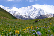 山岳シルクロード ~世界の屋根パミールへの道~