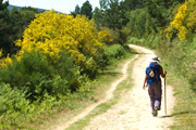 サンティアゴ巡礼完全踏破パート5 セブレイロ峠を越えてガリシアを歩き、聖地サンティアゴへ